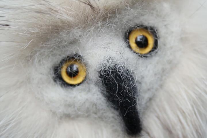 owl_1000