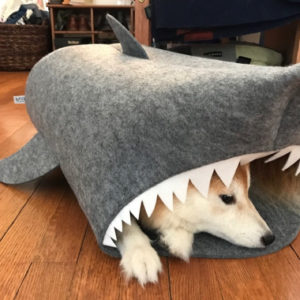 My friends LOVE the shark. And apparently their pup does too!