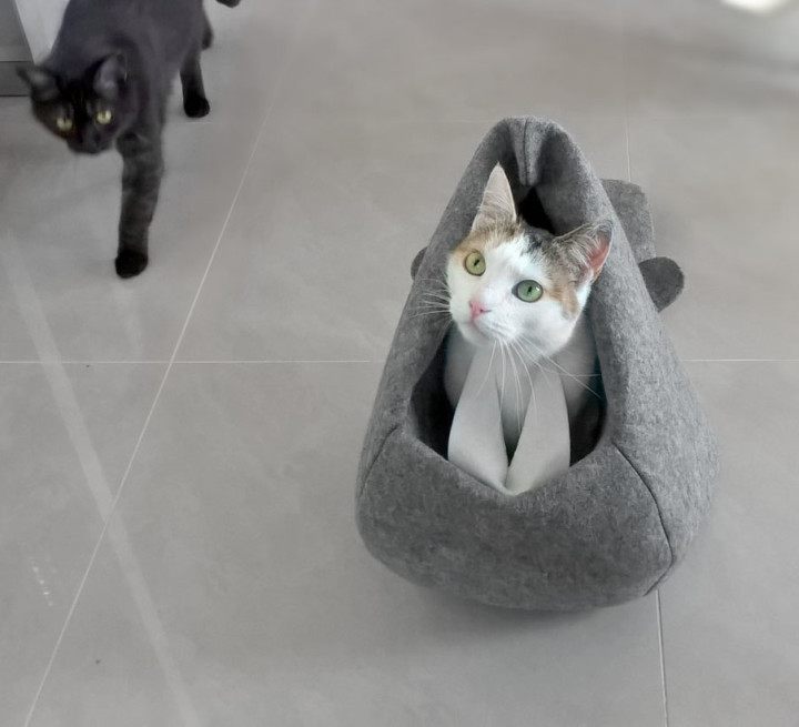 kot w bobrze