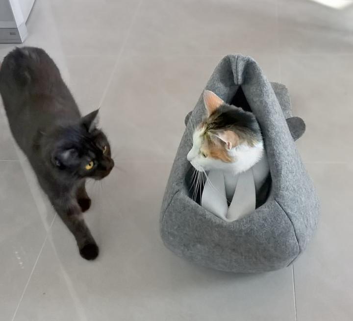 kot w bobrze_2