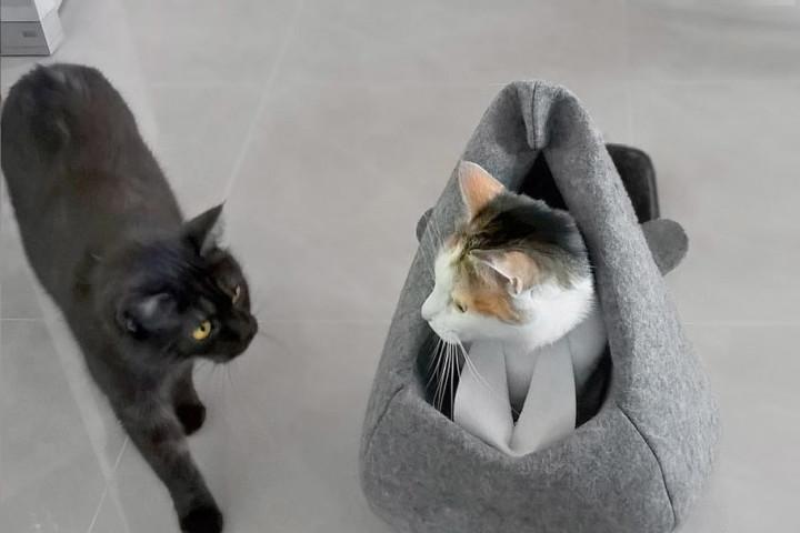kot w bobrze_pull kadr_2_ogon