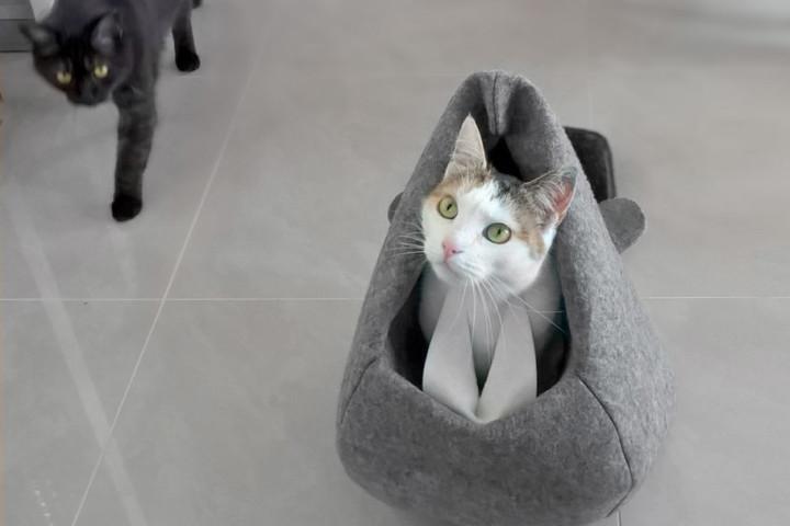 kot w bobrze_pull kadr_ogon